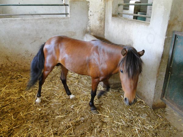 قیمت اسب چه خزر